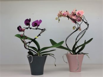4-Vasi ceramica orchidea