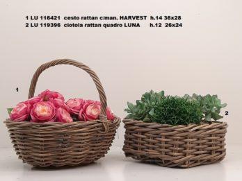G01D-linea basket HERVEST